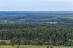 Europäischer Wald im Sommer lizenzfreie stockfotografie