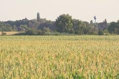 Europäisches Ackerland mit Mais-Feld Lizenzfreies Stockfoto
