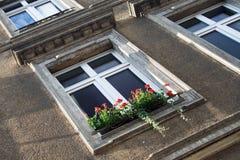 Europäisches Fenster mit roten Blumen Stockbild