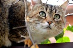 Europäisches Katzenporträt Stockfotos