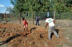 Europén ställa upp som frivillig för själv-tåla mat i byn av P Royaltyfri Fotografi