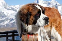 Europa schweizare royaltyfri fotografi