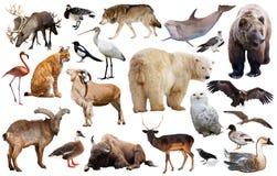 Europa-Tiere lokalisiert Stockbild