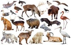Europa-Tiere lokalisiert Stockfotos