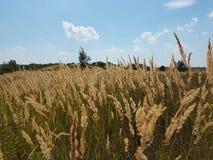 Europa Västra ukrainskt landskap jordbruk fields tidigt den norr vintern för den galilee israel ligganden arkivfoto