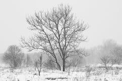 Europa vinter Royaltyfria Foton