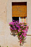 In europe italy milan old architecture  flowers Royalty Free Stock Photography