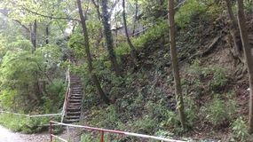Stairs in the woods Royalty Free Stock Photography