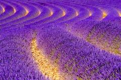 europe kwitnący niekończący się pola kwitną France lawendowi plateau Provence rzędy czującego valensole Zdjęcia Royalty Free
