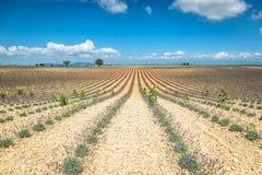 europe kwitnący niekończący się pola kwitną France lawendowi plateau Provence rzędy czującego valensole Valenso Obraz Royalty Free