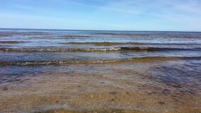 Jurmala.  Seagull swims on the waves