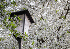 Europe Street Lamp And Blossom Royalty Free Stock Photography