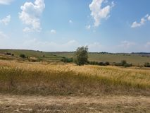 Europe. Western Ukrainian landscape. Agriculture fields. In summer sunny day Stock Photos