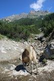 European Alps Royalty Free Stock Photos