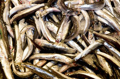 European anchovies Royalty Free Stock Photos