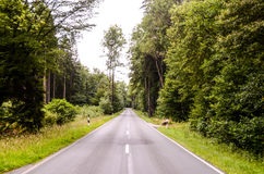 European Asphalt Forest Road Royalty Free Stock Photos