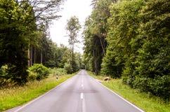 European Asphalt Forest Road Royalty Free Stock Photos