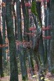 European autumn forest Stock Photos