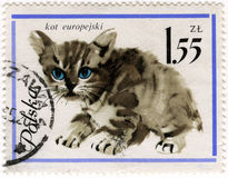 European baby cat on a vintage post stamp. European baby cat on a vintage, canceled post stamp from Poland Royalty Free Stock Photo