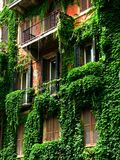 European Balconies. Ivy vegetation growth covers the balconies of an apartment building in Rome, Italy Stock Images