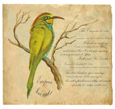 European Bee-Eater - An hand painted vector Royalty Free Stock Photography
