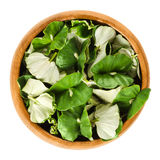 European beech seedlings in wooden bowl over white Stock Photography