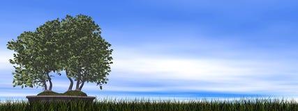 European beech tree bonsai - 3D render Stock Photography