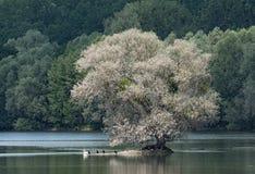 The European bird sanctuary and nature reserve Kuehkopf - Knoblochsaue, germany.  Stock Images