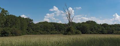 The European bird sanctuary and nature reserve Kuehkopf Knoblochsaue, germany.  Royalty Free Stock Images