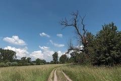 The European bird sanctuary and nature reserve Kuehkopf-Knoblochsaue, germany.  Stock Image