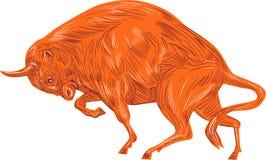 European Bison Charging Drawing Stock Photo