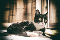 European black and white cat Stock Photo