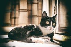 European black and white cat Stock Photo