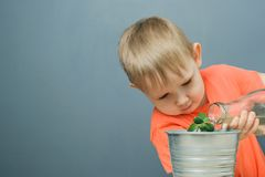 European blond boy child watering young money tree plant. Or crassula ovata in metal flower pot, home  indoor gardening, close-up horizontal stock photo image royalty free stock photo