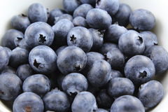 European blueberry fruits Stock Photography