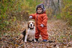 European boy and the Beagle in autumn forest Stock Photos