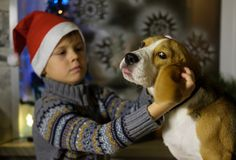 European boy in a red cap with her Beagle dog Stock Image
