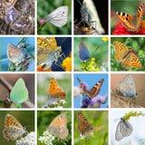 European butterflies Royalty Free Stock Photos