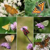 European Butterfly Species Collection Stock Photography