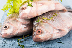 European carp with a thyme Stock Photos