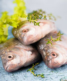 European carp with a thyme and lemon Royalty Free Stock Image