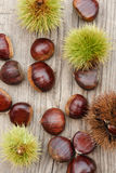 European chestnuts Royalty Free Stock Photo
