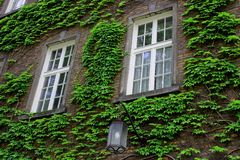 European brick building with squared windows with green ivy and outdoor latern. European classical brick building with squared windows with green ivy and Royalty Free Stock Photo