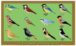 European common birds. Vector set of 12 European common birds. European Crested Tit,European PiedFlycatcher,Eurasian Bullfinch,Eurasian Nuthatch,European vector illustration