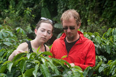 European couple on coffee plantation in Costa Rica Stock Image