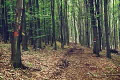 European deciduous forest Royalty Free Stock Photos