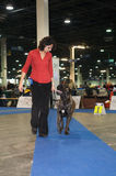 European Dog Show 2008 Royalty Free Stock Photography