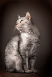 European Domestic Cat Stock Images