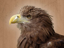 European eagle Royalty Free Stock Photos