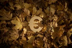 Euro Currency Symbol on Autumn Leaves in Late evening Sun royalty free stock image